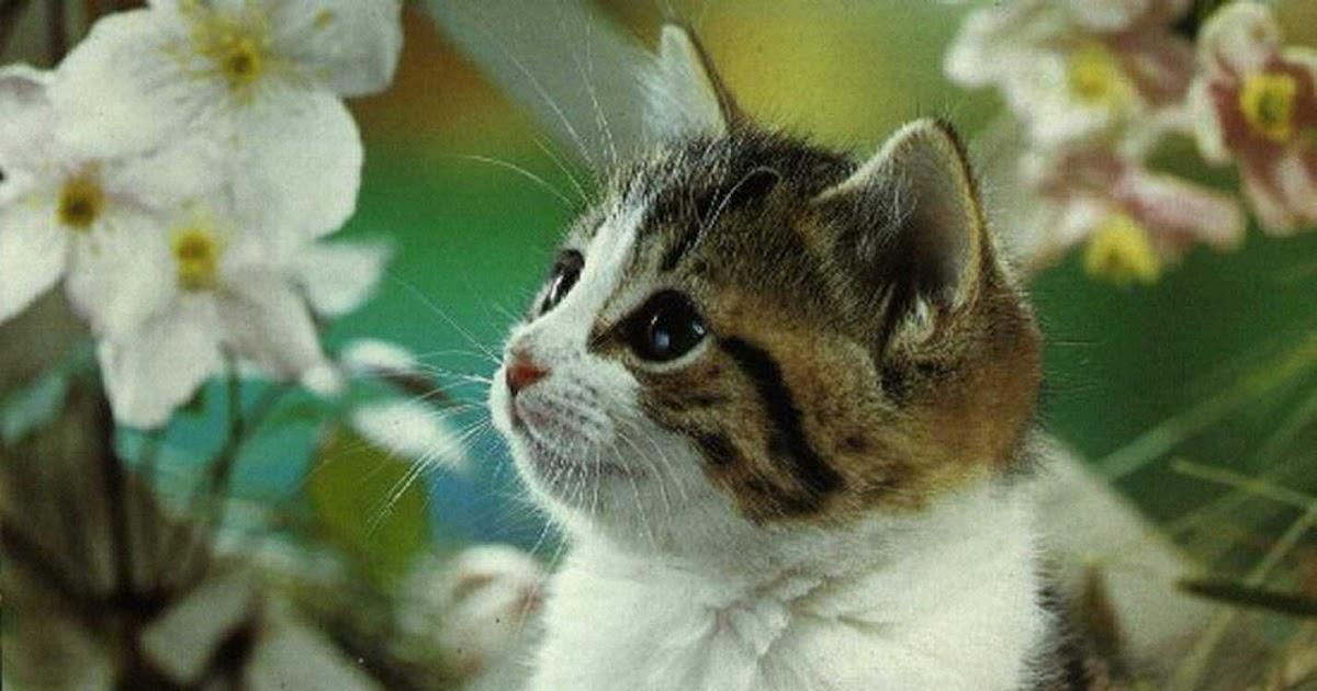 Gatti e co a mici per la pelle elenco di alcune for Piante velenose per i gatti