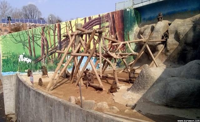 Monos en el Gran Parque de los Niños de Seúl
