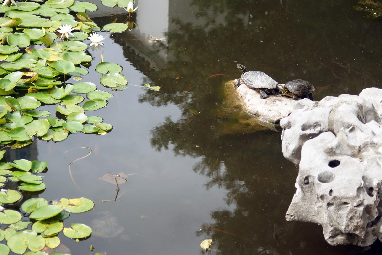 Continually Surprised!: The Sun Yat-Sen Chinese Garden