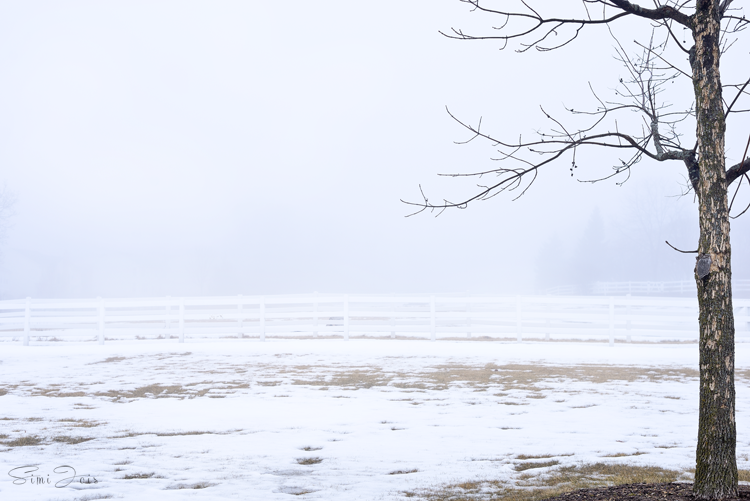 #FoggyLandscape #Winter #Landscape #SimiJoisPhotography