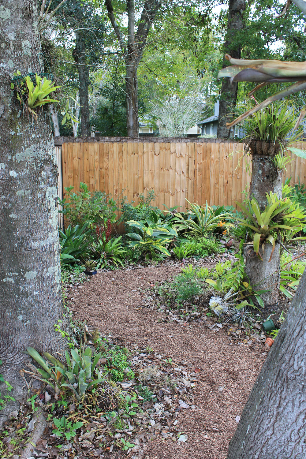 the rainforest garden 8 reasons to plant groundcovers