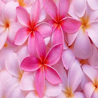 http://www.szivarvanydesign.hu/2012/02/104-chamael-arkangyal.html