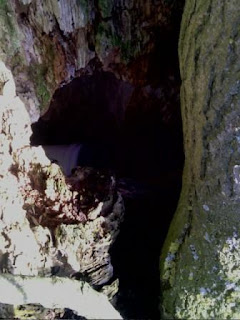 A nice place to hide a cache - Hole in a tree