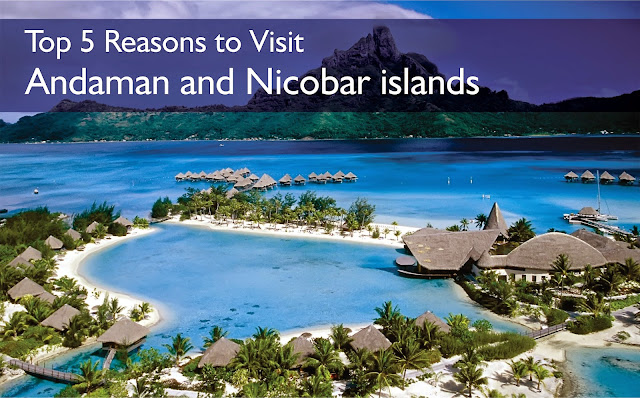 Top 5 Reasons to Visit Andaman and Nicobar islands
