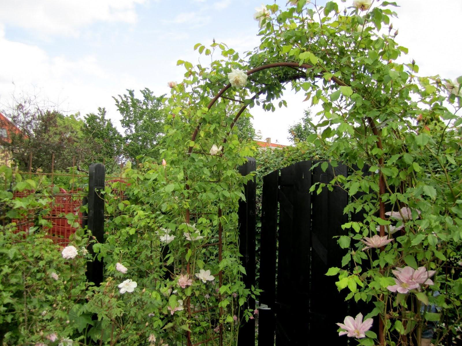 Nettes lille have: mine roser
