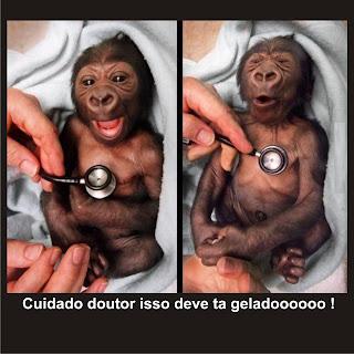 Macaco no médico só acaba em bobeira !
