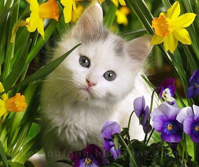 Posted by klANA at Ahad, April 01, 2012