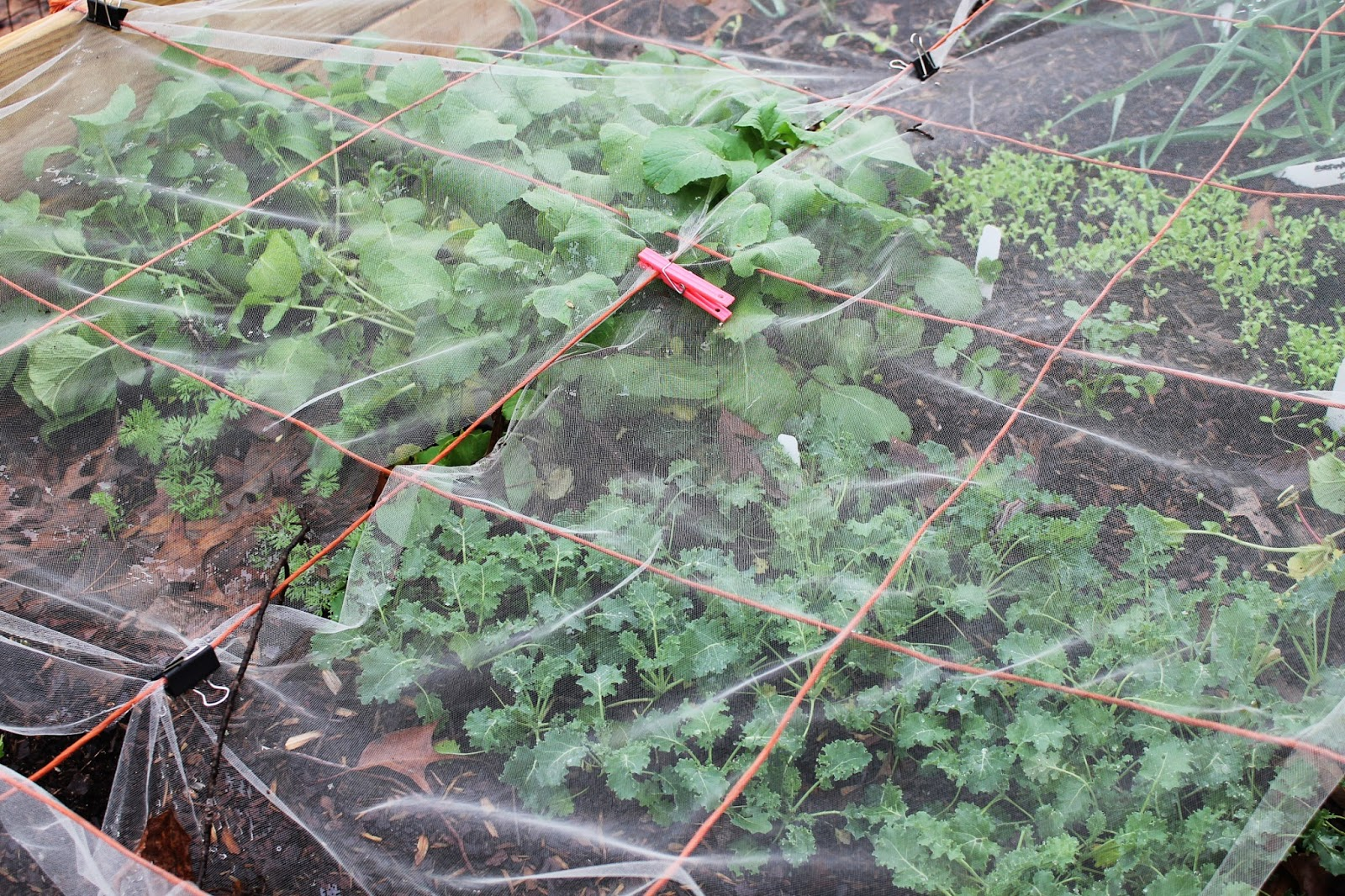 gardening tips for small spaces healthy delicious winter salad
