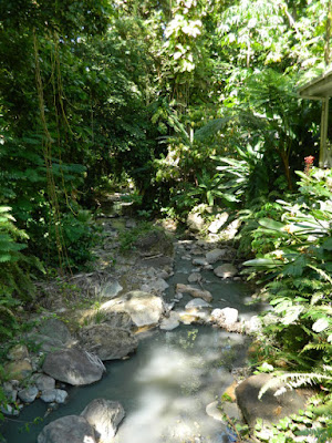 Stream at Diamond Botanical Garden Soufriere St. Lucia by garden muses-not another Toronto gardening blog