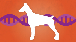 dog genome project