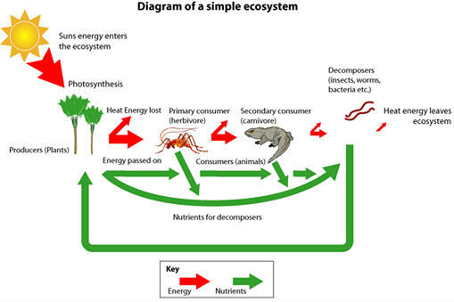 Science  Levels Of Organization Ecosystems