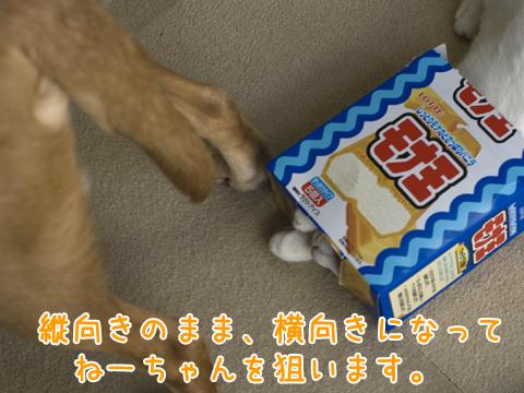 犬を襲う子猫