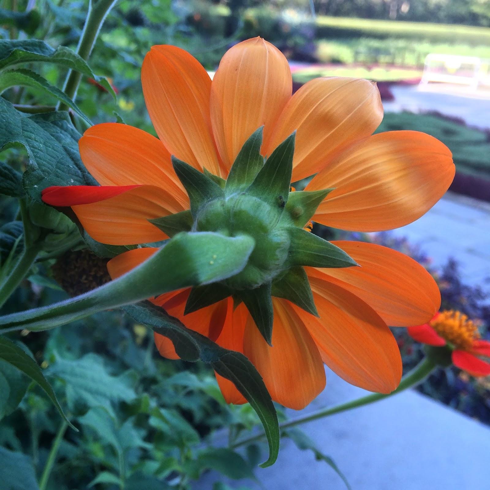 Flower Power, #conservatorygarden #flower #flowerpower #centralpark #nyc 2014