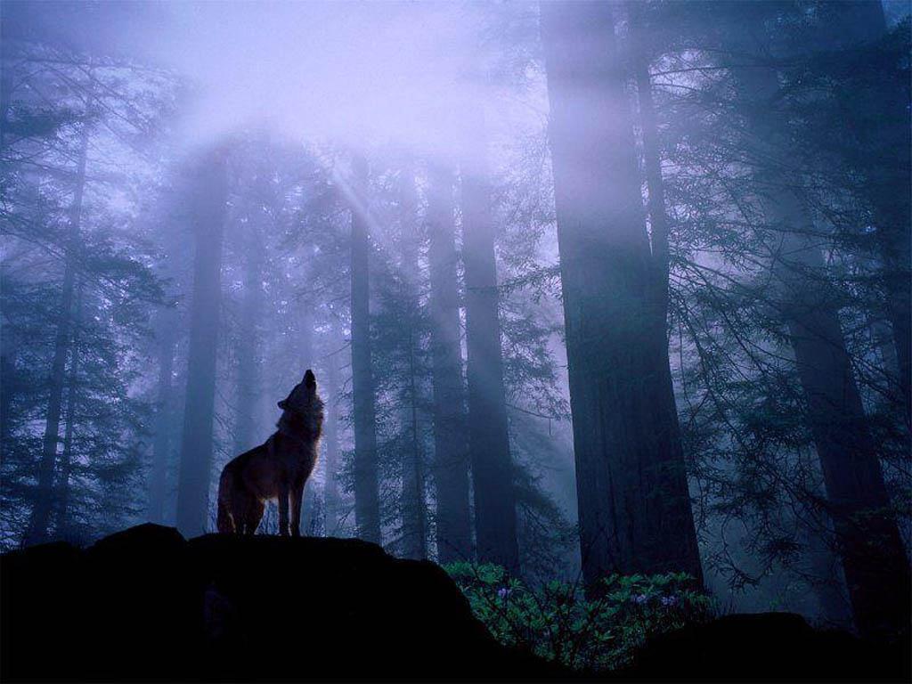 Juego de preguntas - Página 7 Los-dos-lobos