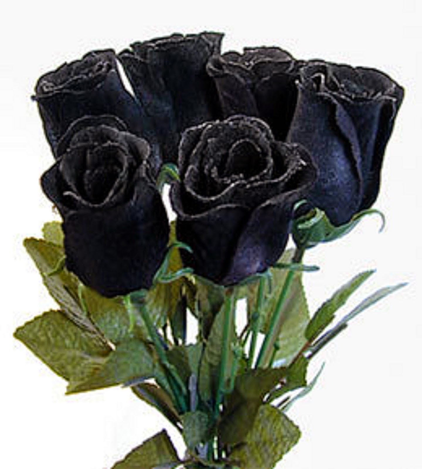 Real Black Roses Meaning