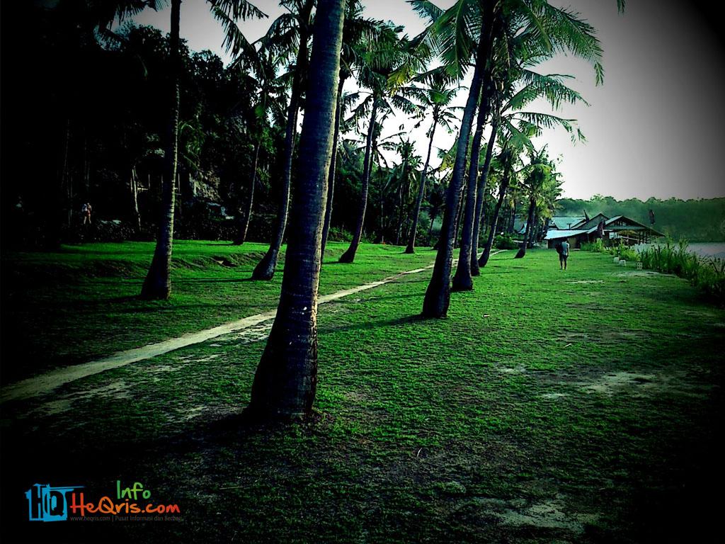 Pohon Kelapa Pantai Balangan Bali