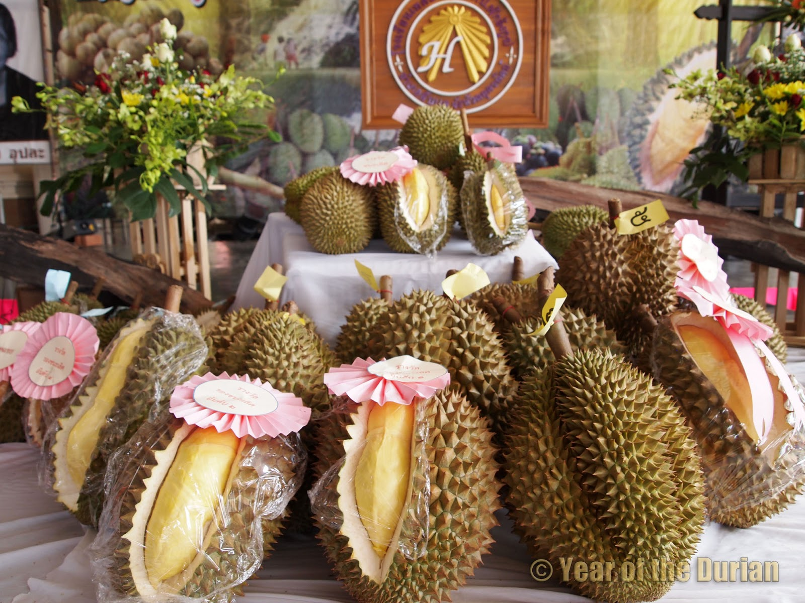 laplae durian festival uttaradit thailand photo essay  laplae durian festival uttaradit thailand photo essay