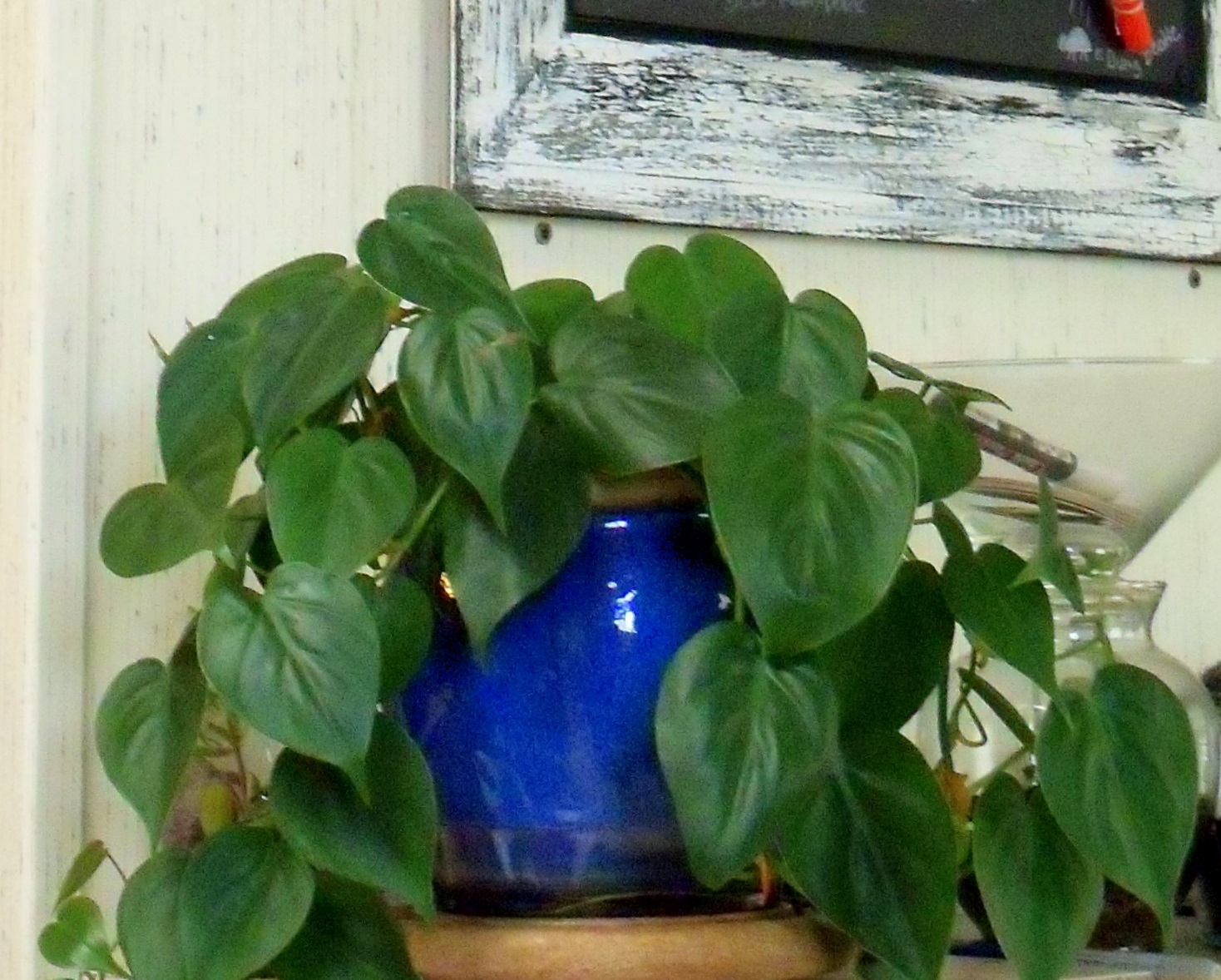 Make the best of things house plant fanatic - Leafy houseplants ...