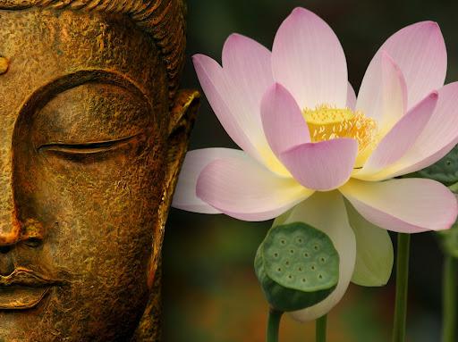 Significado de Flor de Loto Qué es, Concepto y Definición