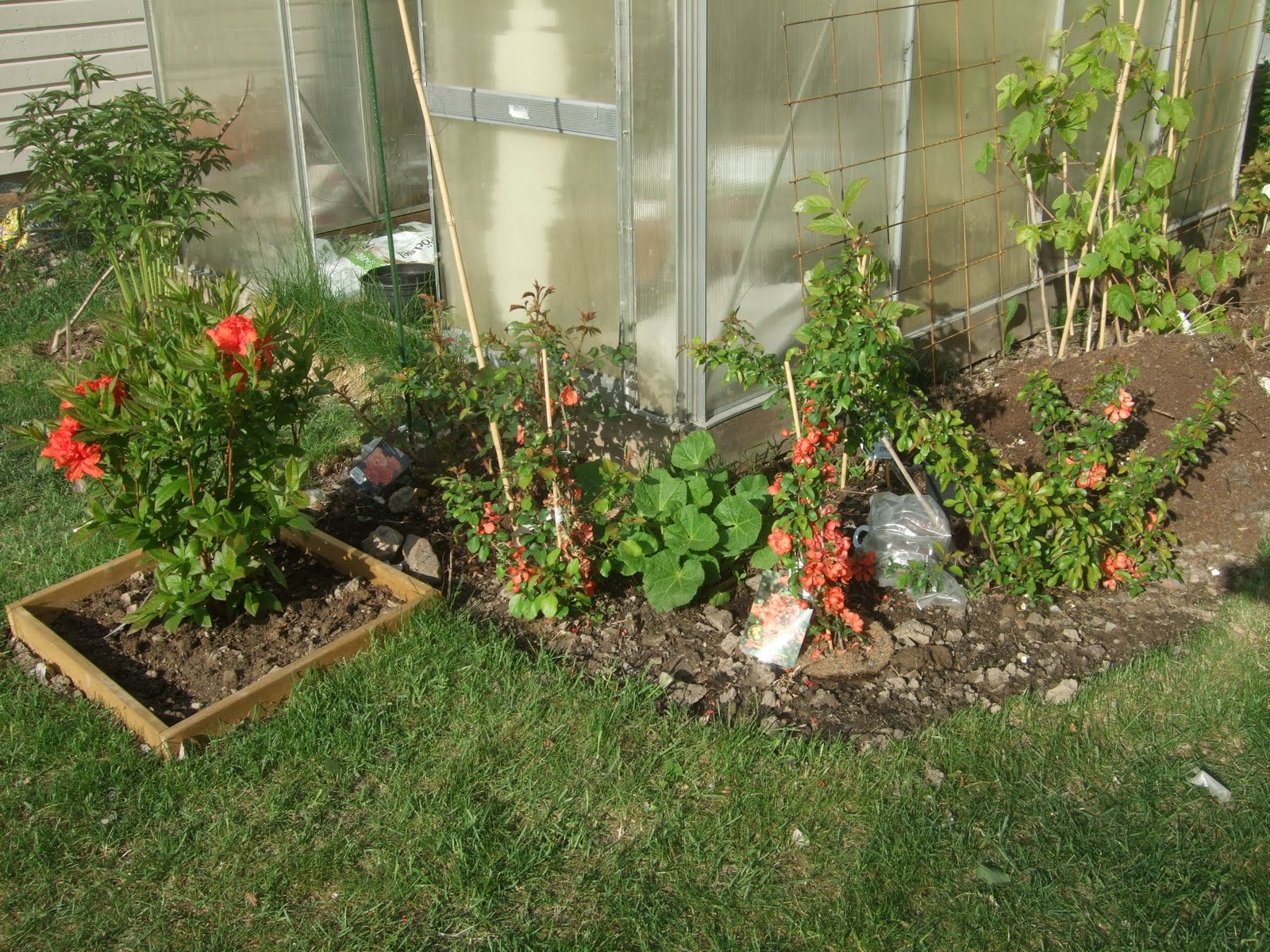 Mina trädgårdar: maj 2011