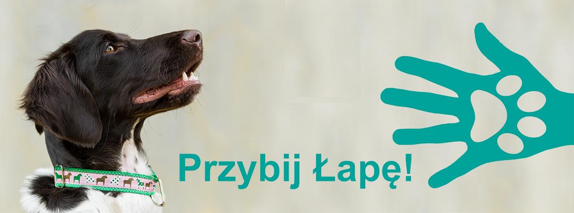 Przybij Łapę! Blog | Zayra - mały munsterlander | Masza - golden retriever | Psi blog