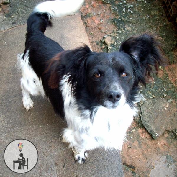 cachorro, pet love, meu cãozinho, vira lata, tobby, faz parte da família, membro de 4 patas, cachorro, cão, dog, instadog,