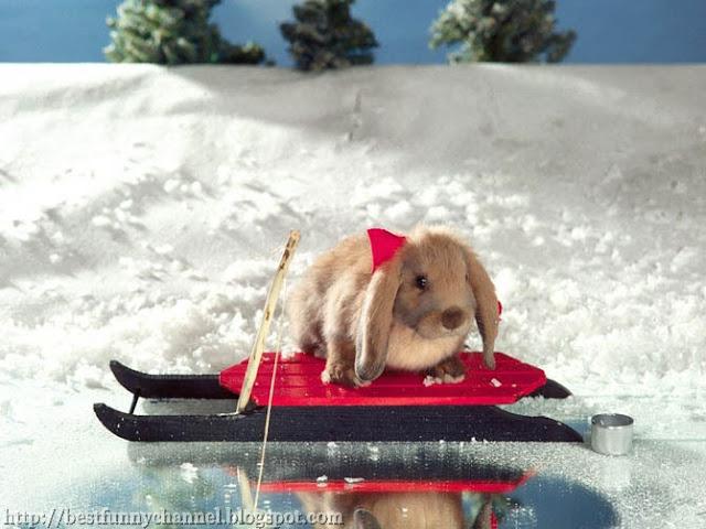 Funny bunny fisherman