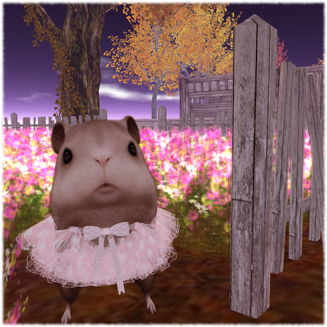 Garden+Hamster All Dressed Up