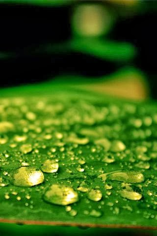 Dew Drops Android Wallpaper