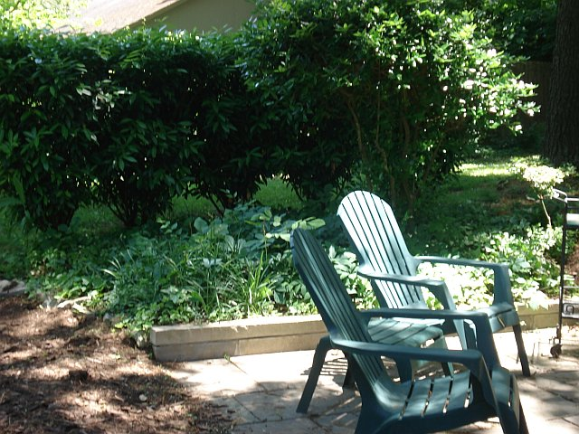 Non-Stop Diva: Gardening Diva: Summer 2011 Updates