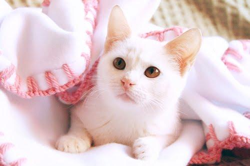 animals talk cute white cat