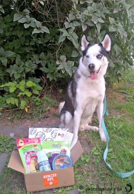 Monthly dog subscription box