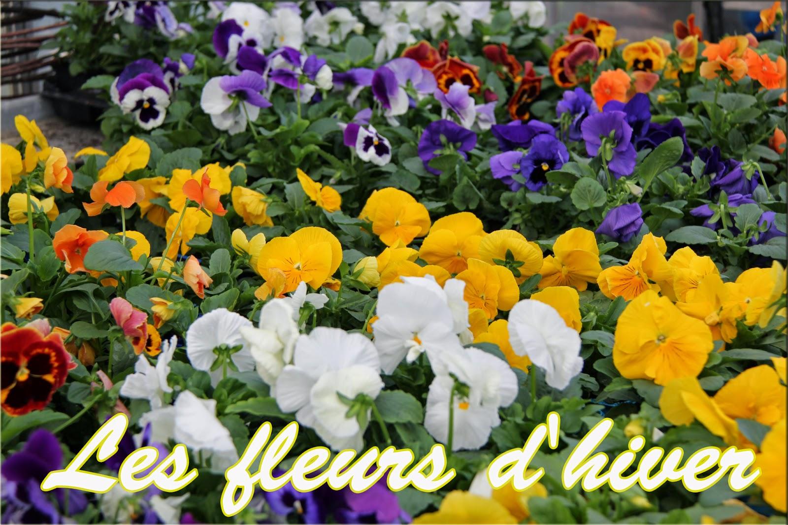 Les fleurs d\u0027hiver