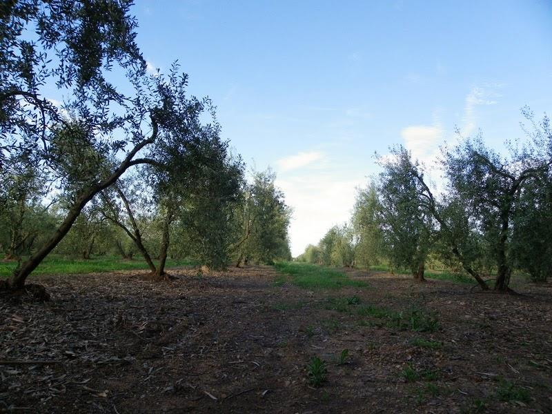 Trabajos de campo del Programa Andarríos, miembros del Grupo Local SEO-Sevilla