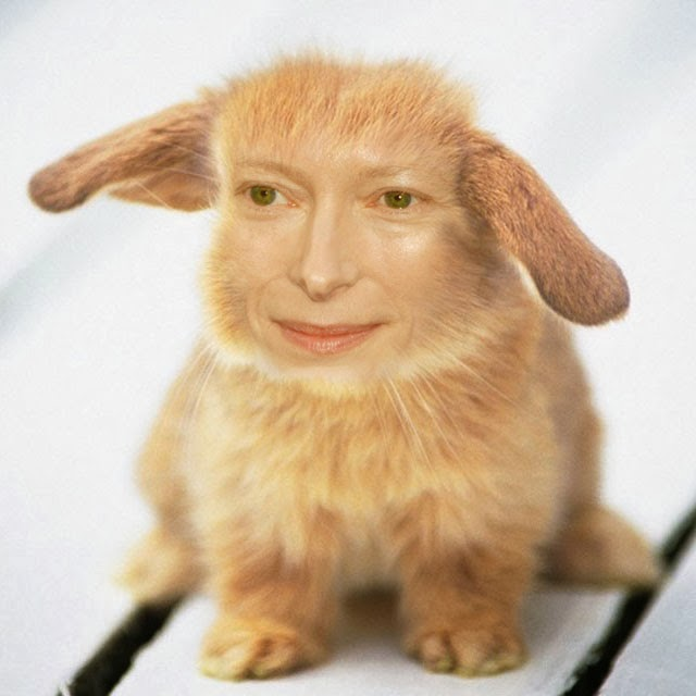 tilda-swinton-rabbit, tilda-swinton-animal, tilda-bunton