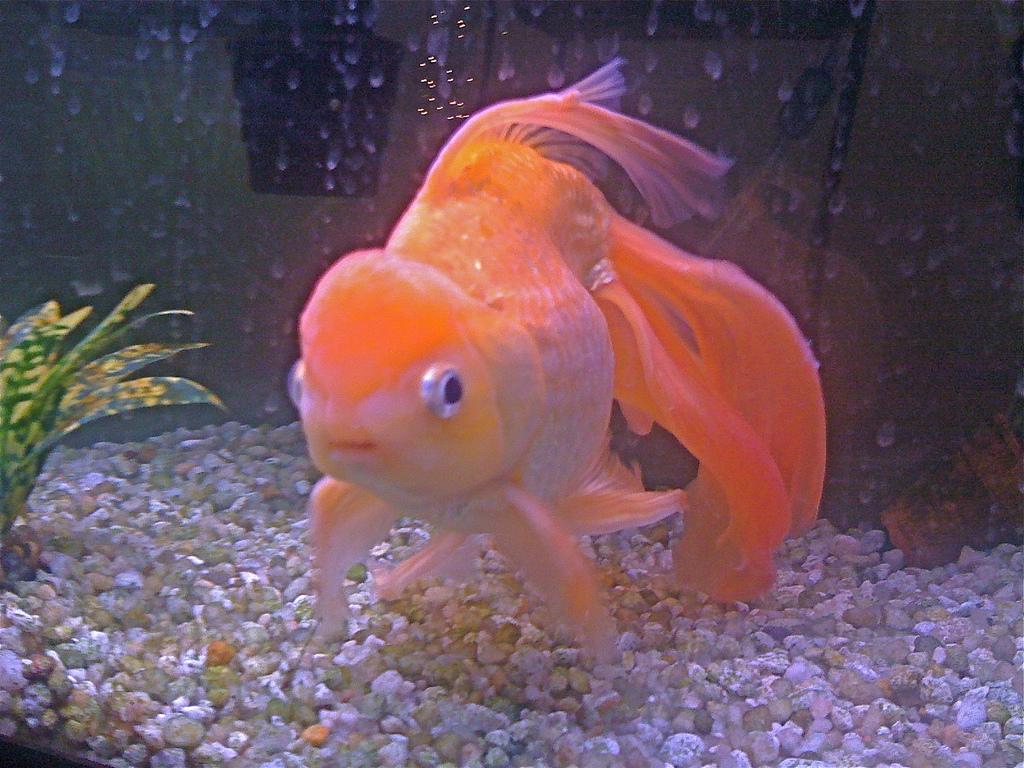 Avenger blog: Goldfish Pictures