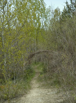 an archway formed by overhanging branches along one of the paths at Scout Valley