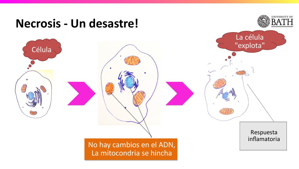 6.12 - La muerte celular | Nutrición y estilo de vida saludable (Eat ...