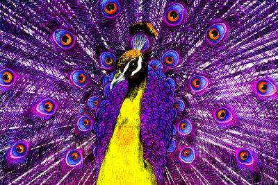 Imagens Gratis Fotos De Pav 227 O Imagens Para Compartilhar