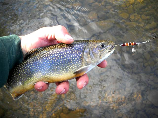 Information about fishing spinners for your next outdoor for Trout fishing pa