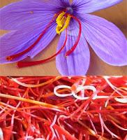 El azafran es el condimento mas caro del mundo, ideal para la paella