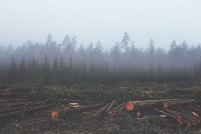 Kerusakan Lingkungan karena Aktivitas Manusia