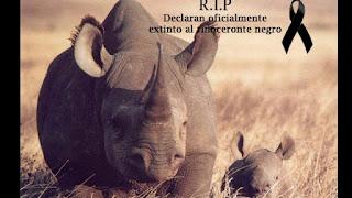 rinoceronte negro desaparece