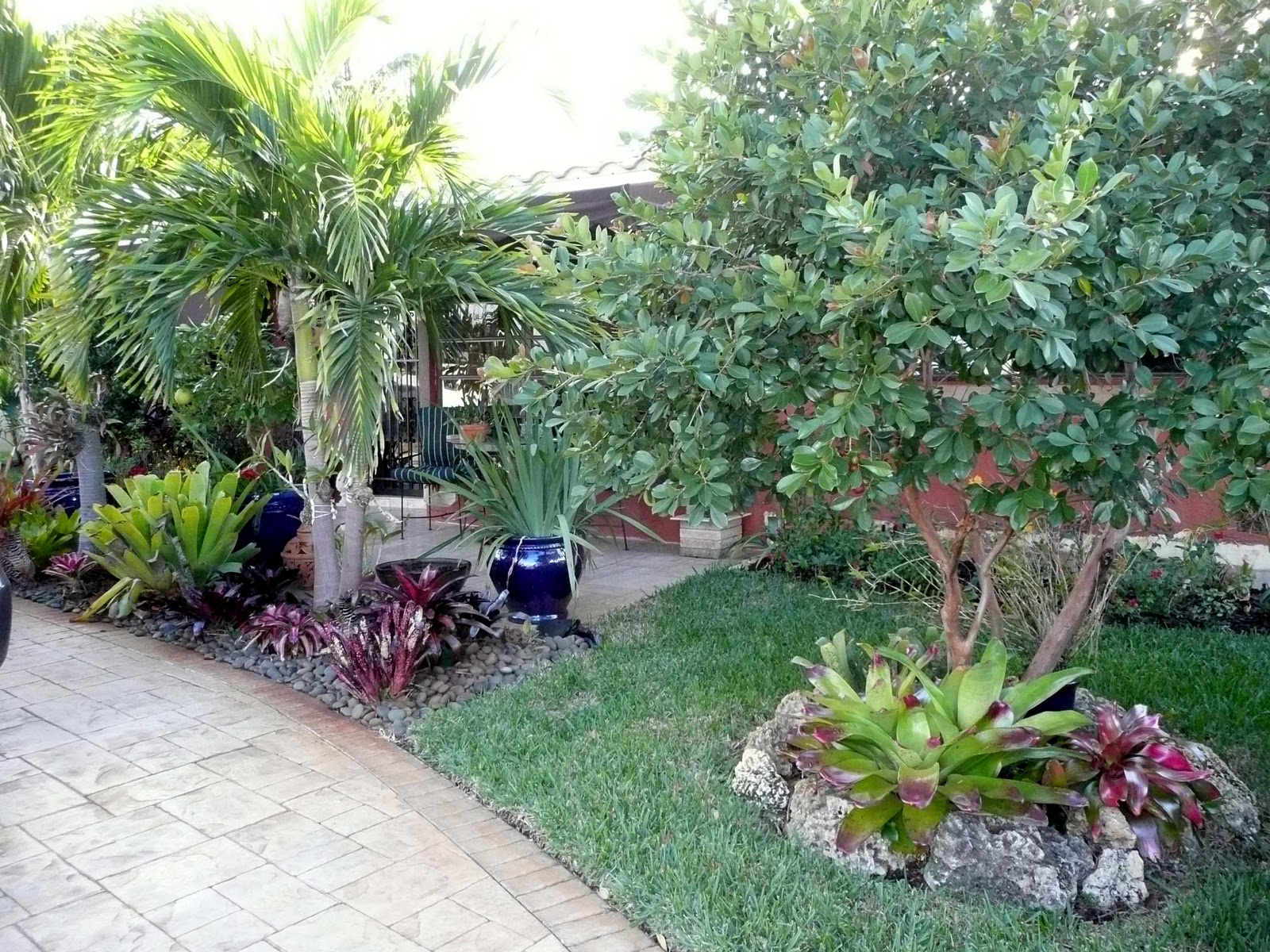 Gardening South Florida Style Bromeliads In The Garden