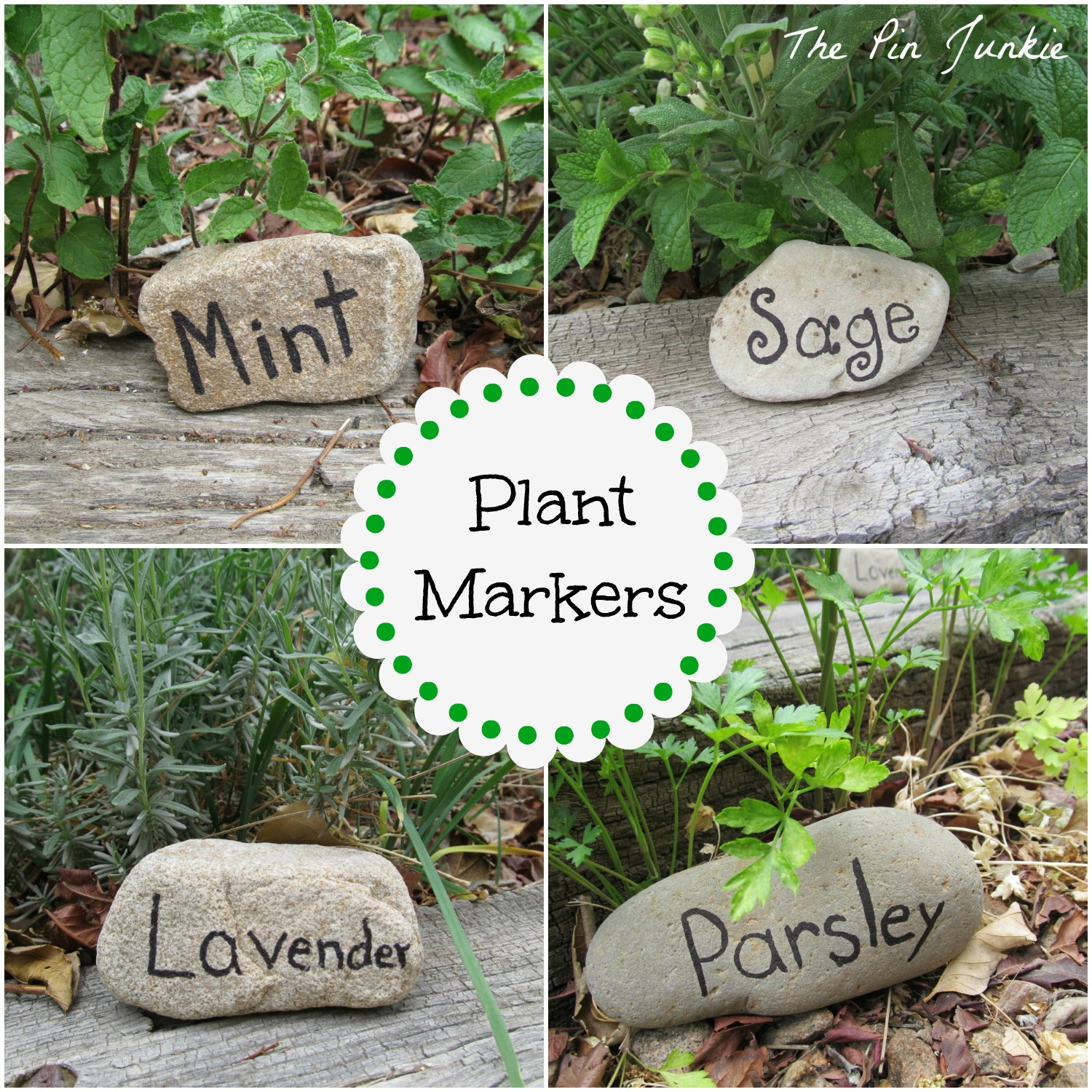 rock plant-markers