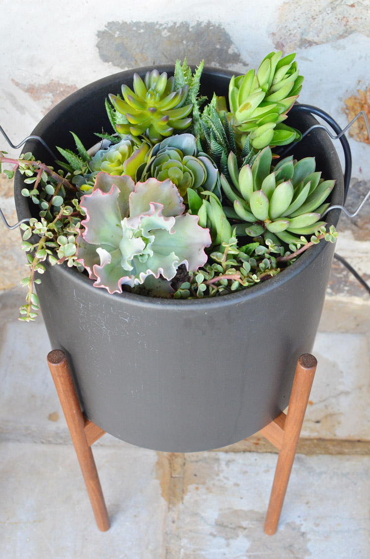 How to Plant Succulents Photo by Amy Renea of A Nest for All Seasons