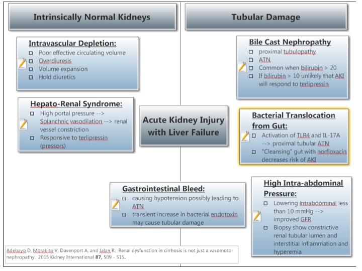 Nephron Power: Concept Map: AKI in Liver Failure