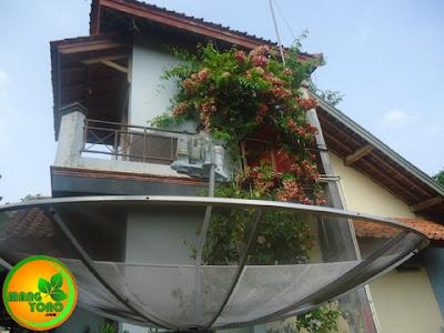 Antena Parabola di rumah admin di Subang