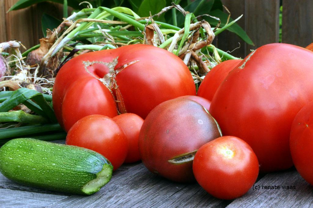 gartenblog geniesser garten tomaten. Black Bedroom Furniture Sets. Home Design Ideas