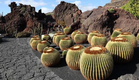 jardines creativos de cactus, ideas para diseño de jardines